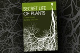 Gig poster for Secret Life of Plants